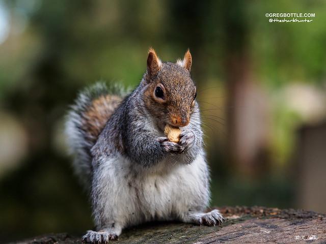 Recent squirrel photos