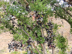 DSCN0199 SHOE TREE