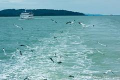 Chasing Seagulls