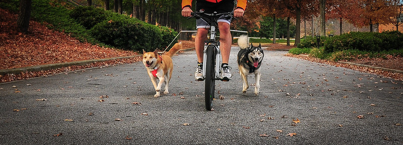 so i went biking with blu this weekend... 8273096201_0fc907e9e6_c