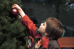 sequoia decorating the xmas tree - _MG_0520
