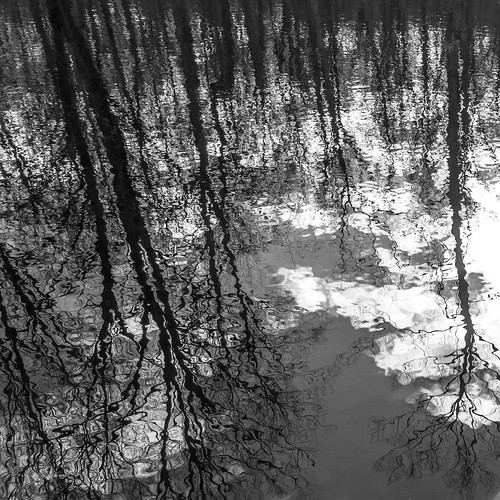 Trees reflected in Pine Swamp Beaver Pond