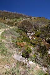 The Australian Alps Walking Track