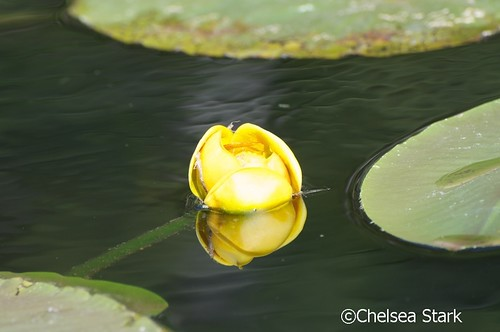 Yellow bulb ©ChelseaStark http://www.chelseastarkphotography by chelseastarkphotography.com