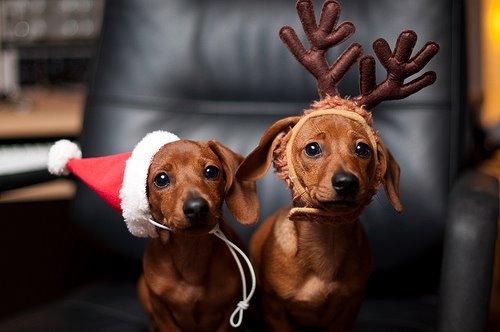 Feliz Natal !!!!!!!!! by tania patchwork