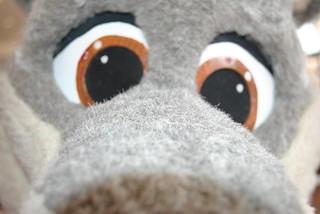 Tzup Closeup