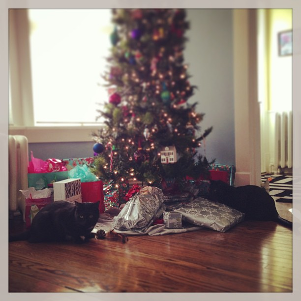 Bad kitties won't leave the tree/gifts alone.