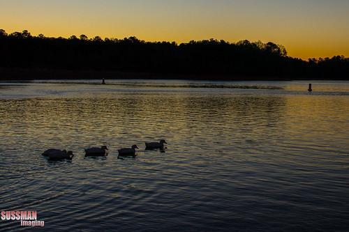 lake reflection bird nature water animal sunrise georgia ducks lagrange troupcounty westpointlake thesussman sonyalphadslra550 sussmanimaging