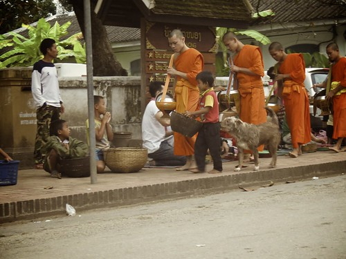 orange dog dogs asia working unescoworldheritagesite unesco worldheritagesite monks laos luangprabang alms chidren worldtrekker