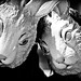 Young Rabbits In Love, Plate 2 by Thomas Hawk