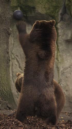 bear%20bowling