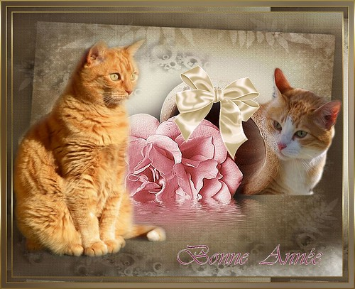 Poussy et PtitLouis souhaitent une Bonne Année à tous leurs copains et copines à fourrure