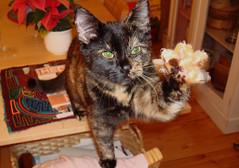 Minki the cat