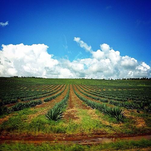 africa beauty coast kenya motherland iphoneartist iphone4only uploaded:by=flickstagram instagram:photo=34099616398620409710317760