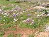 Kreta 2005-1 091