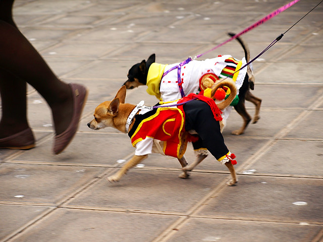Dogs in Traditional Costume, San Abad, Buenavista del Norte, Tenerife
