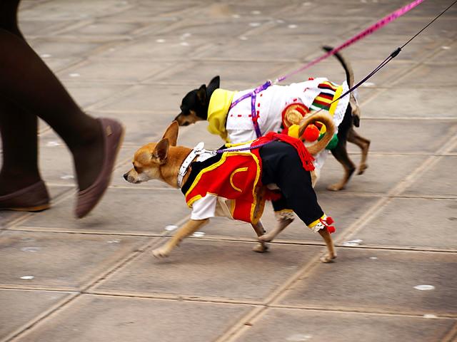 Dogs in Traditional Costume, San Abad, Buenavista del Norte, Tenerife