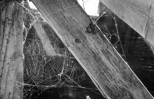 Webs, Spider Web, Spiders