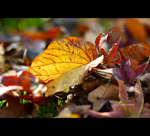 Fallen Leaves by © Crystal Dawn Photography