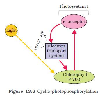 NCERT Class XI Biology Chapter 13 - Photosynthesis in higher plants