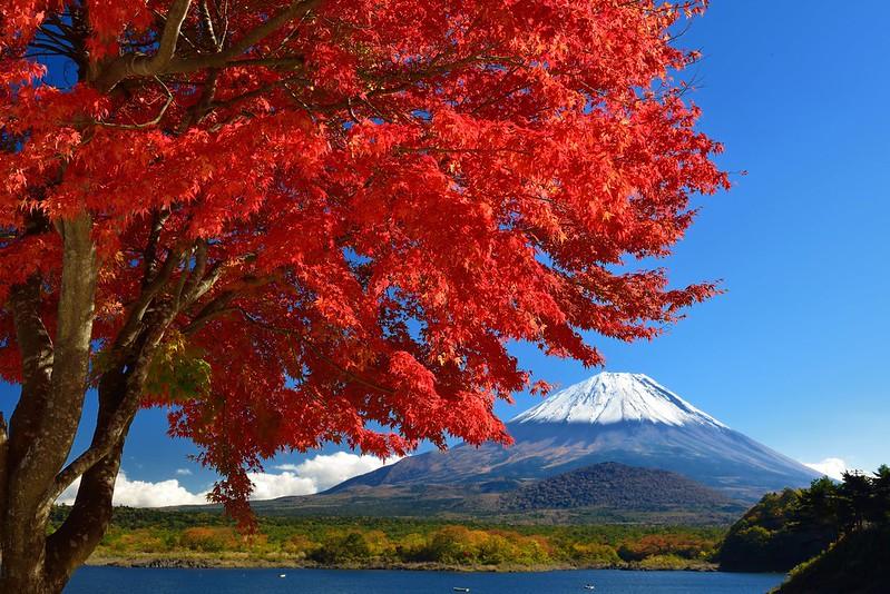 精進湖の紅葉