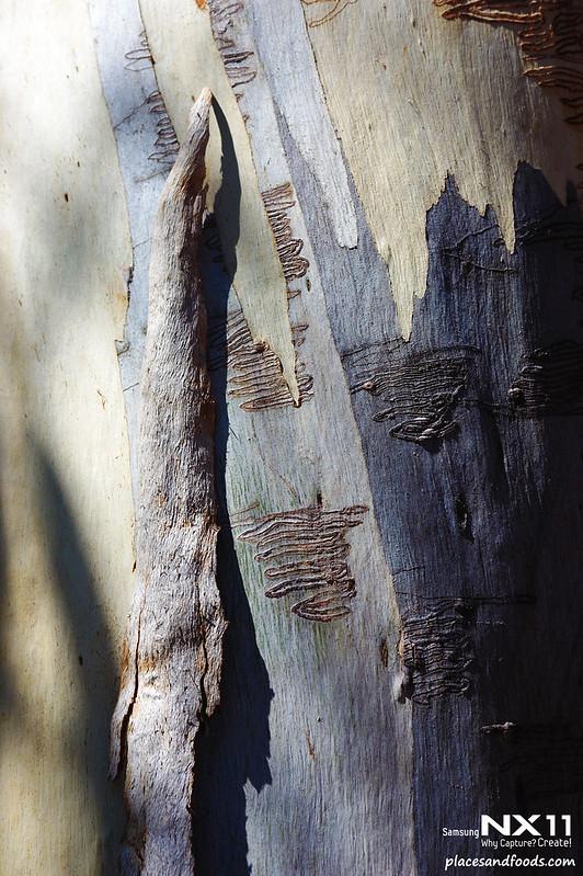 Freycinet beetle marks
