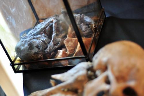 Fetos, esqueletos de seres extraños, animales con dos cabezas, anomalías genéticas,... todo ello tuvo su particular rincón en la exposición. Viaje en la nave del misterio - 8277753329 05824d7f2a - Viaje en la nave del misterio