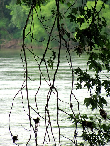 trees nature water leaves landscape flow virginia foliage stems layers jamesriver fluvannacounty twisg bremobluff