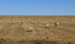 prairie, agriculture, steppe, straw, hay, field, soil, plain, natural environment, rural area, grassland,