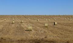 plateau(0.0), crop(0.0), badlands(0.0), prairie(1.0), agriculture(1.0), steppe(1.0), straw(1.0), hay(1.0), field(1.0), soil(1.0), plain(1.0), natural environment(1.0), rural area(1.0), grassland(1.0),