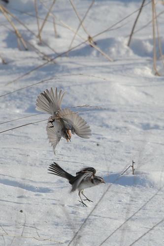 Angry Bird_40468.jpg