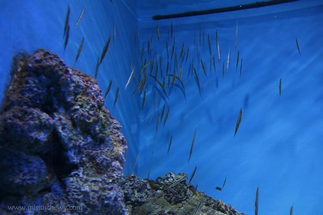 RWS S.E.A Aquarium 453