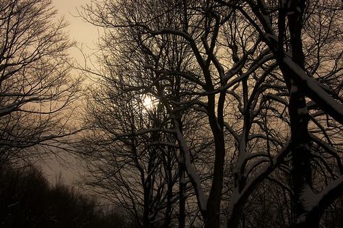 winter aperture nikon montréal hiver montroyal goldenhour mountroyal d90 nikond90