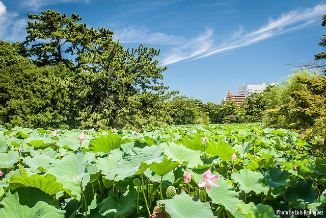Parque Ritsurin-10