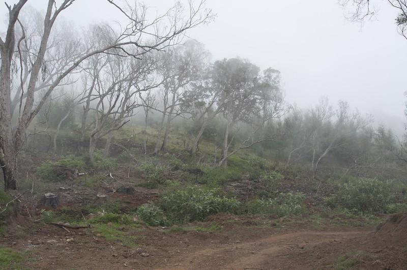Tévelave forest
