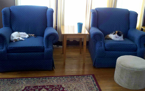 This is a terrible picture of our two calico cats in our blue chairs