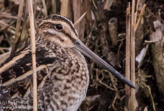 snipe 100% sharpened wb clarity + selctive NR