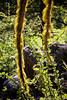 Lichen, Southern Oregon by Steven David Johnson