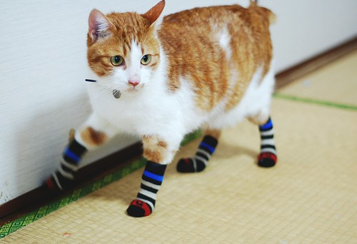 i bought ryoma some socks.