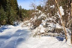The Potlatch River Trail