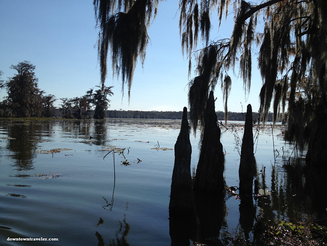 Cajun Country Alligator Swamp Tour 6