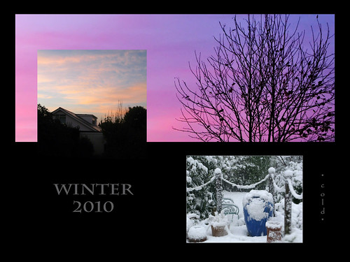 0596, 2010, Garden, Winter