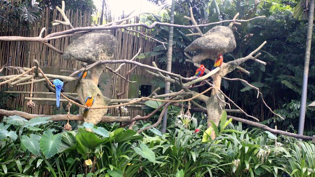Jurong Bird Park - 29th Jan 20131