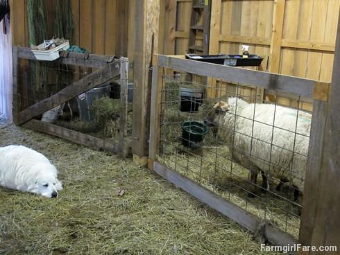 Lambing season begins! (9) - FarmgirlFare.com
