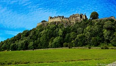 Stirling Castle and Cows