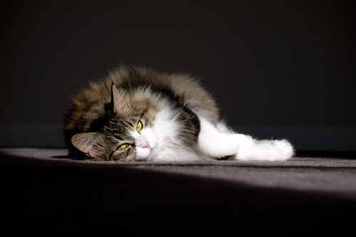 Nap in the spotlight by Brown.Tabby