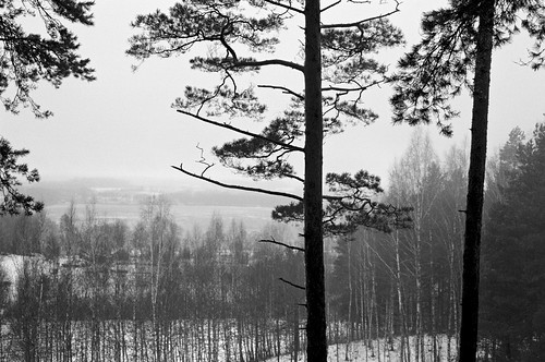 canon a1 kodak bw400cn 400 analog beautiful blackandwhite blackwhite bw cinematic countryside emotion forest frozen ginuciai hill ice lake landscape lithuania monochrome natural nature park snow village woods wooden winter trees tree