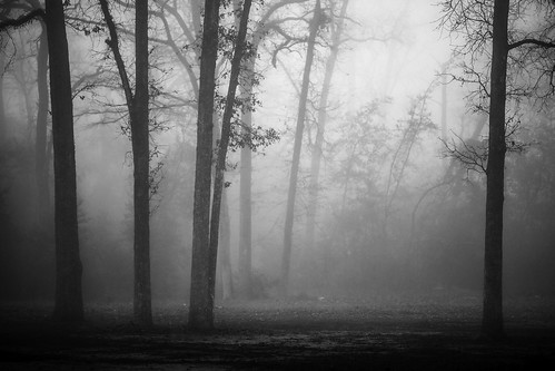 trees blackandwhite bw usa nature fog dark landscape photography us photo woods moody texas photographer unitedstates image tx branches unitedstatesofamerica january foggy houston fav20 100mm photograph 100 trunks fav30 f28 fineartphotography fav10 harriscounty 2013 fav40 intimatelandscape fineartphotographer houstonphotographer ¹⁄₆₄₀sec ef100mmf28lmacroisusm mabrycampbell january202013 20130120xb9a0077