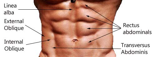 Target all muscles in the Abdominal region