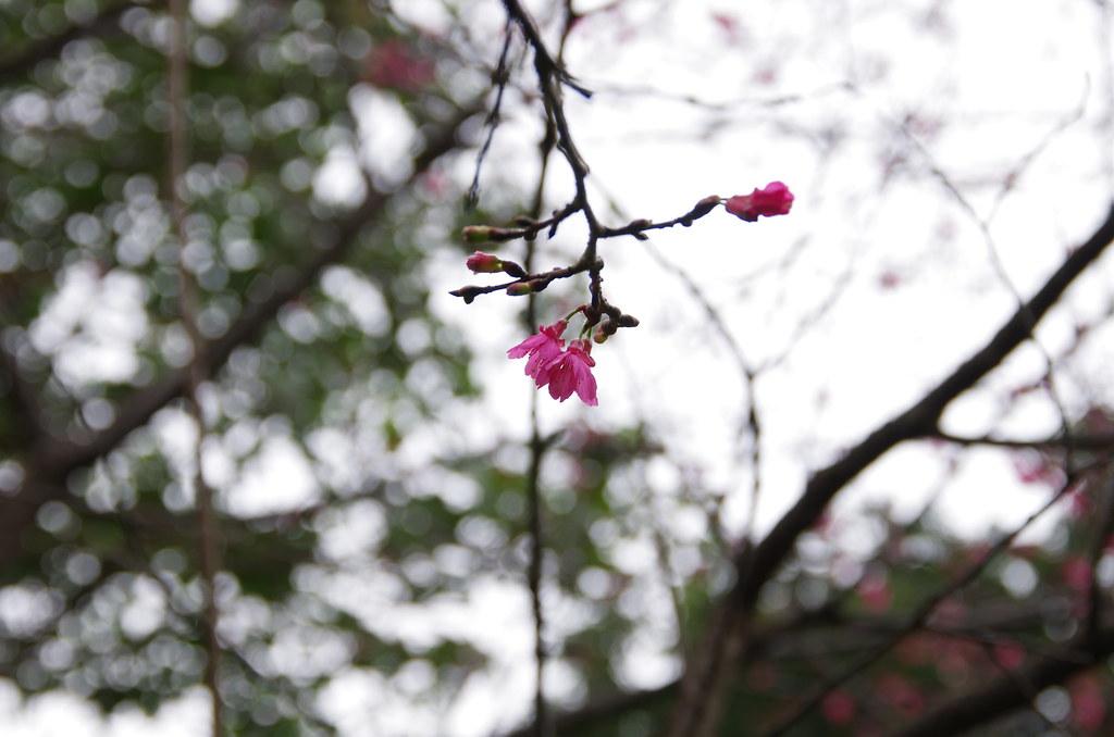 天氣陰~巧遇花<圖多>